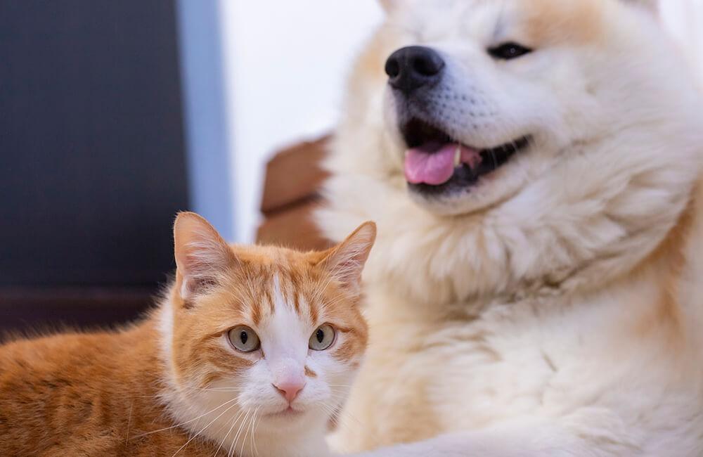 3 moduri de a evita declanșarea alarmei de către animalele de companie
